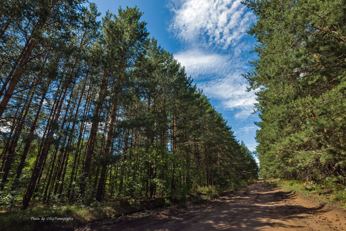 лес самара картинки мороз водитель также