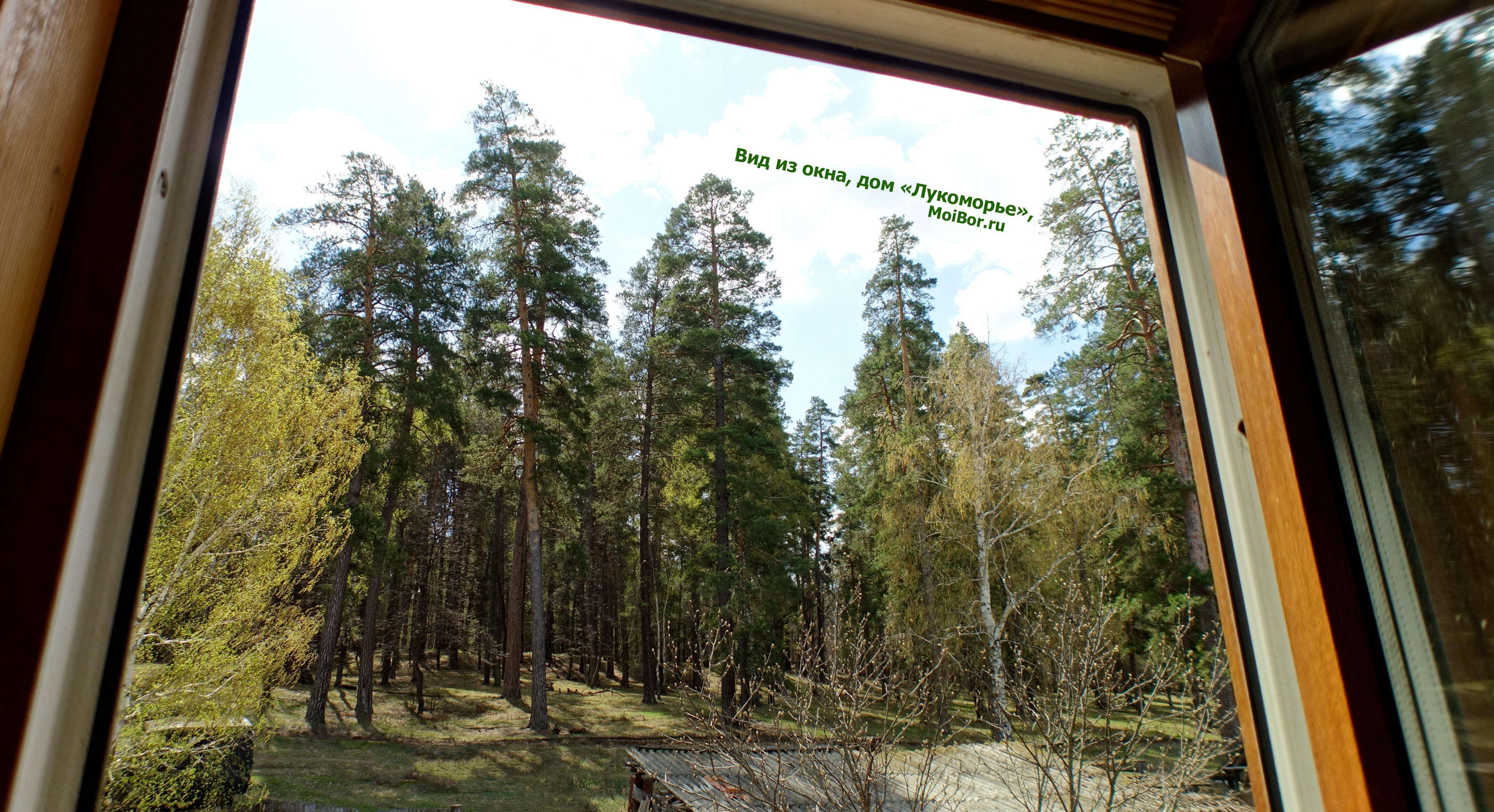 Вид из окна на Бузулукский бор